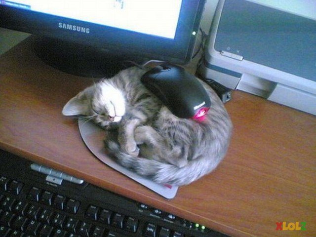 When cat love mouse